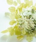 combinatii-culori-nunta_verde-lamaie-oliv-43