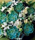 combinatii-culori-nunta_verde-66