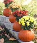 aranjamente-florale-pentru-nunti-de-toamna_dovleac-2