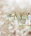 fotografii-nunta-artistice-43