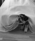 poze-fotograf-profesionist-nunta-1