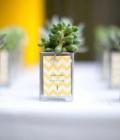 Marturii de nunta: plante in ghivece mici