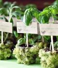 marturii-nunta_plante-in-ghivece-mici_4