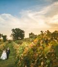 organizare-nunta-in-aer-liber-langa-vita-de-vie-3