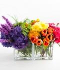 stil-nunta_culori-curcubeu_multicolor-12