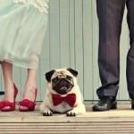 fotografii de nunta artistice